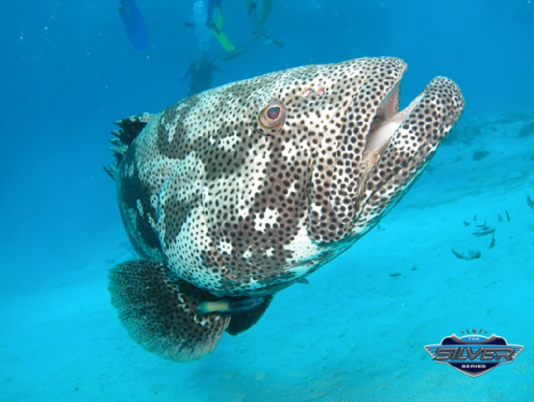 Great Barrier Reef Snorkeling Tour with 3 Reef Site Visits from Cairns