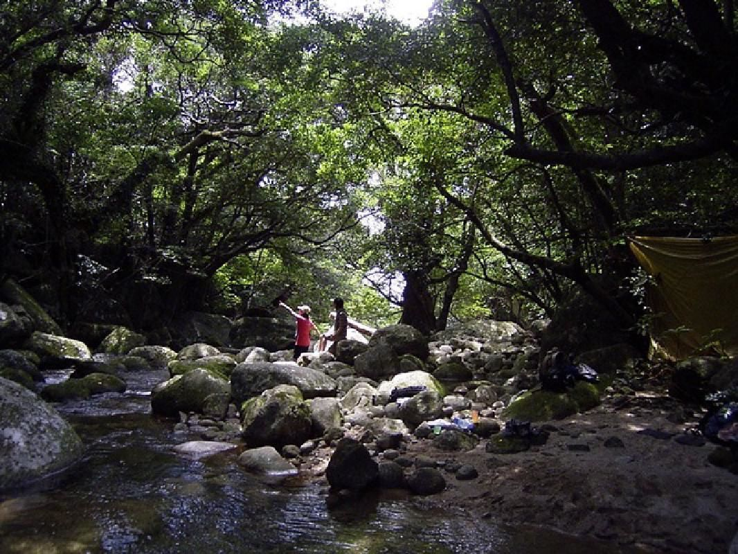 Western Evergreen Forest Nature Observation Tour
