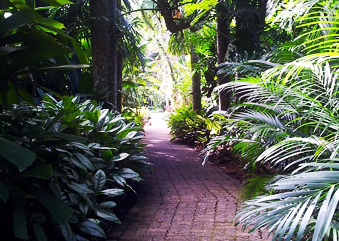 Full Day Cairns Tour with Mt. Whitfield Hike, Dome Climb and Night Market