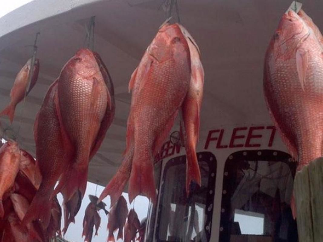 Clearwater Beach Deep Sea Fishing in the Gulf of Mexico