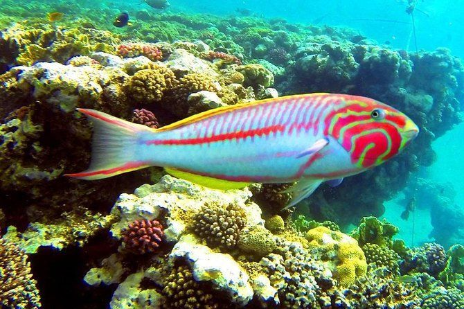 From Hurghada: Sharm El Naga Full-Day Snorkeling Tour