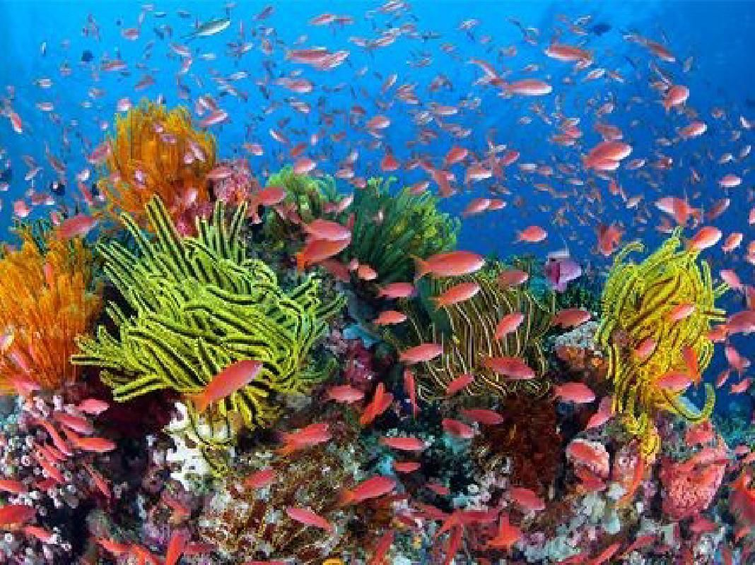 Reefquest Certified Diving Adventure from Cairns