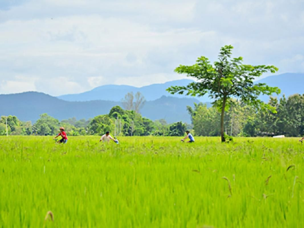 Chiang Mai Full Day Bike Tour and Zipline Adventure with Lunch