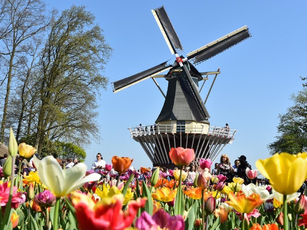 Keukenhof Gardens and Flowerfields Small Group Tour with Hotel Pick-Up