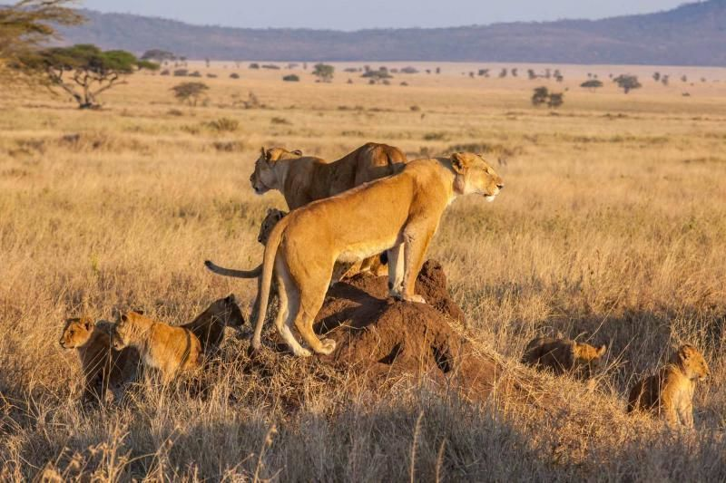3 DAYS CATS CRADLE – MASAI MARA KENYA SAFARI