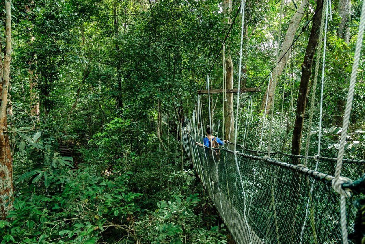 Taman Negara Tropical Rainforest 3-Day Tour from Kuala Lumpur