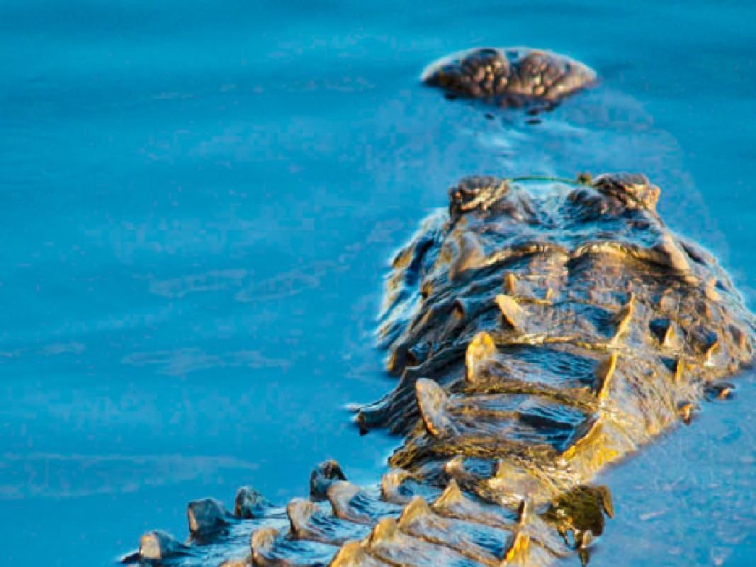 Everglades National Park Guided Sightseeing Tour, Airboat Ride and Reptile Show