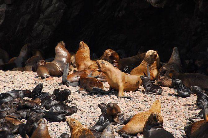 Ballestas Islands private group tour