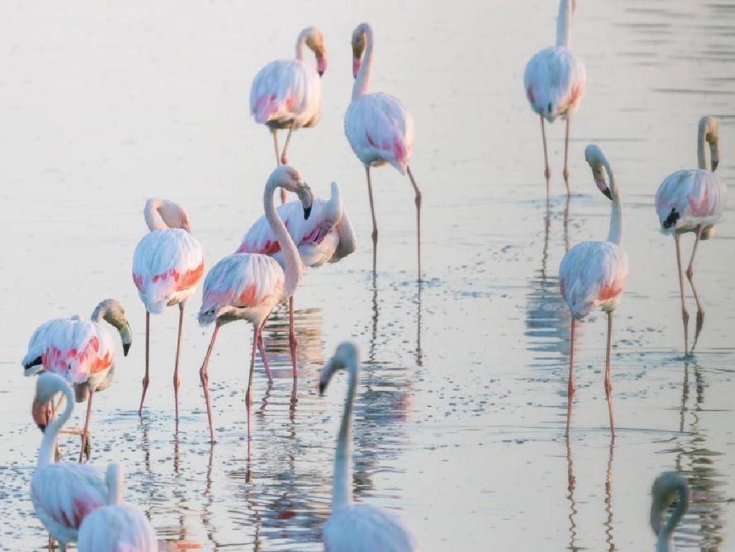 El Rocio, Donana Natural Park and Matalascanas Beach Full Day Tour from Seville