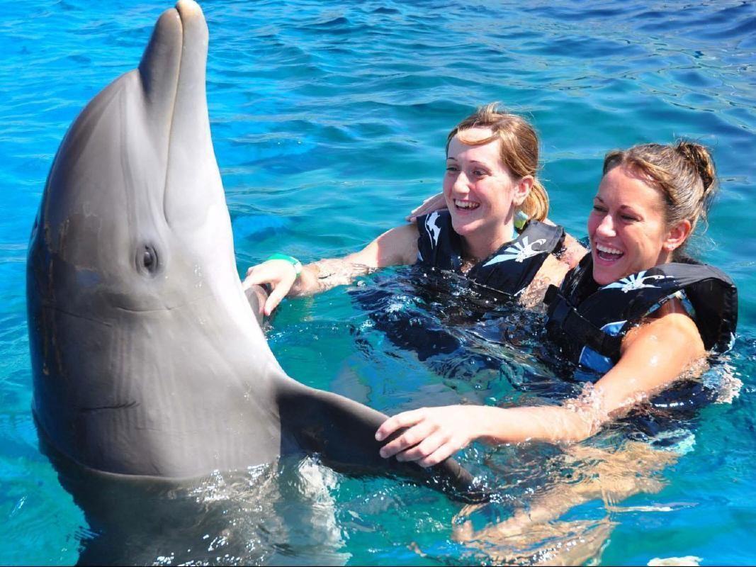 Marineland Dolphin Interactive Adventure & St. Augustine Sightseeing Tour