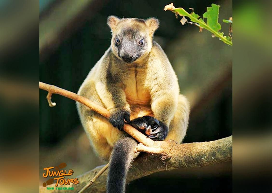 2-Day Cape Tribulation and Daintree Tour with Accommodation