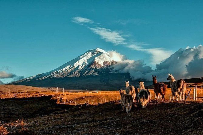 Cotopaxi Hike & Horse