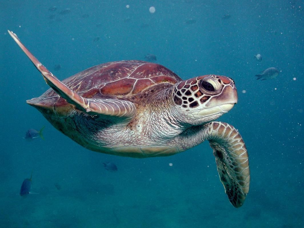 Great Barrier Reef Full Day Tour from Cairns with Reef Magic Cruise