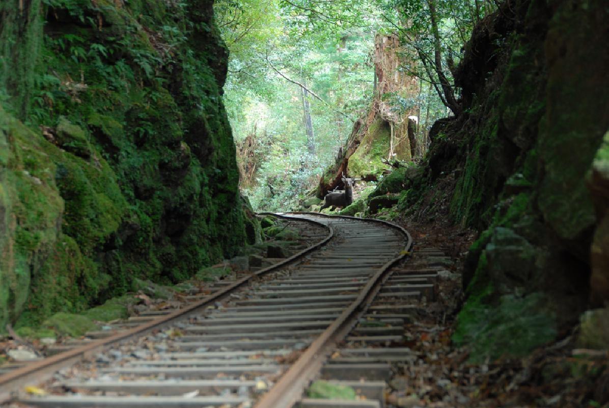 Mountain Hiking Course to Jomon Cedar in Yakushima