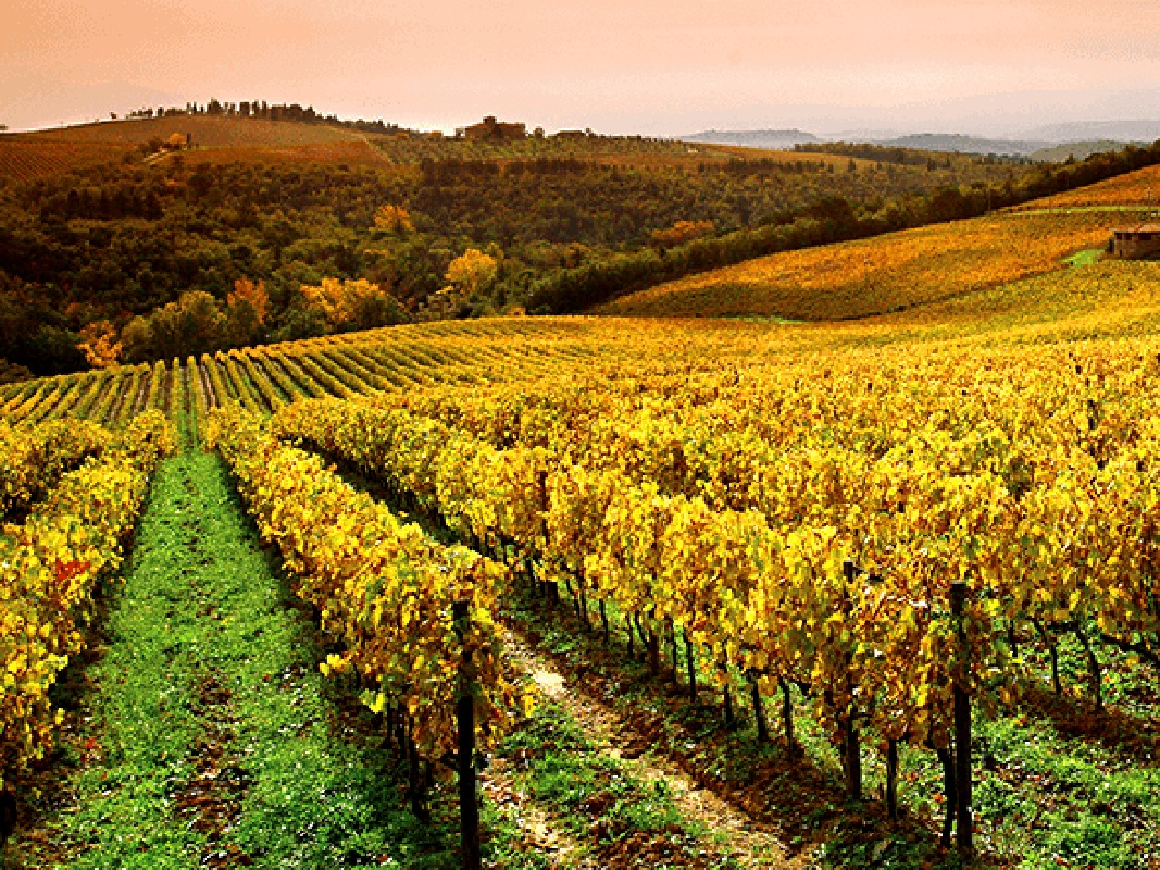 Chianti and Tuscany Countryside Tour by Vespa Bike with Lunch