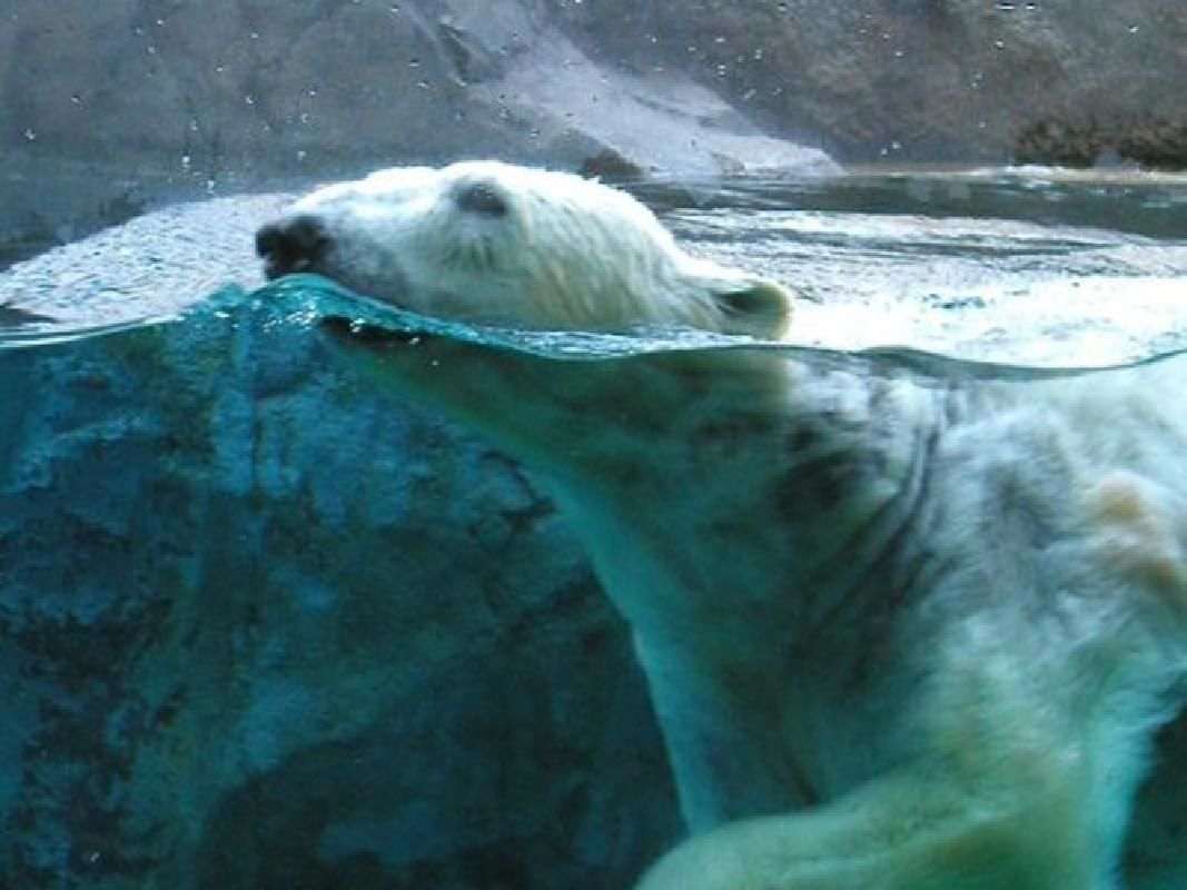 Private Asahiyama Zoo Full Day Private Taxi Tour